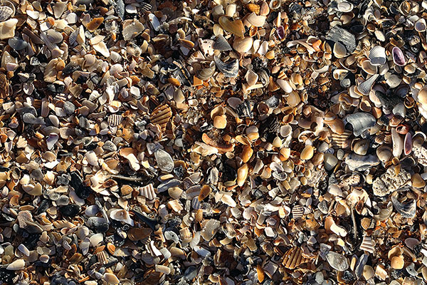 Shark Tooth Hunt Contest
